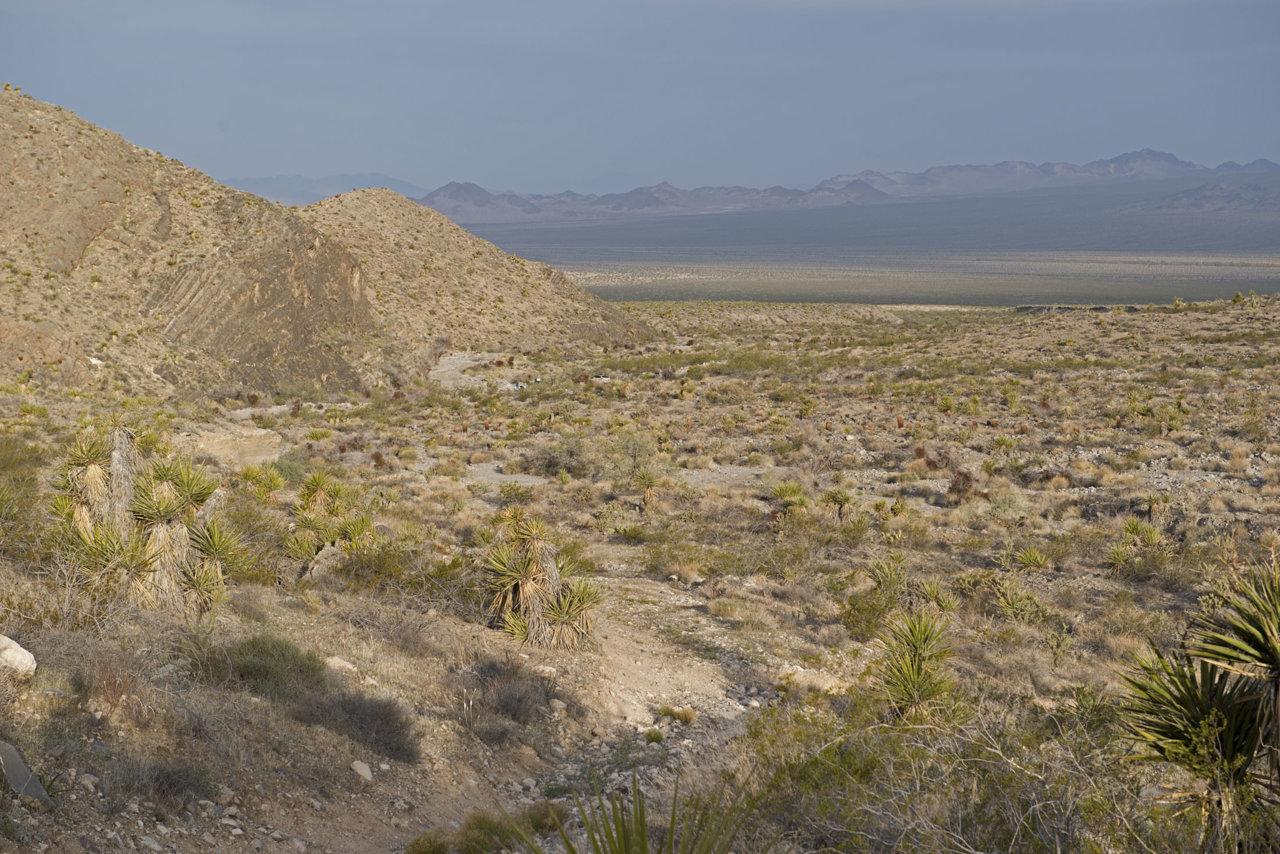 Mojave1272.jpg